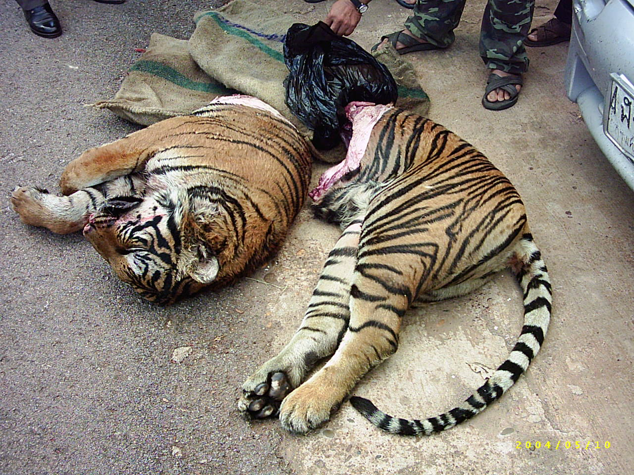 help to stop the tiger trade againess en